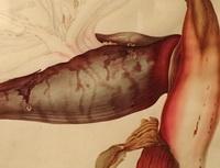 Franz & Ferdinand Bauer in het Teylers Museum: kunst versus wetenschap
